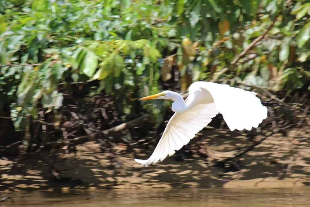Birding in Monkey River